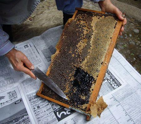 蜜の蓋切り.jpg